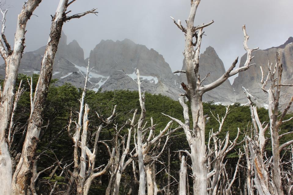 12 - Arentina - 7 - Torres del Paine 085